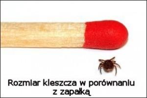 kleszcz-borelioza